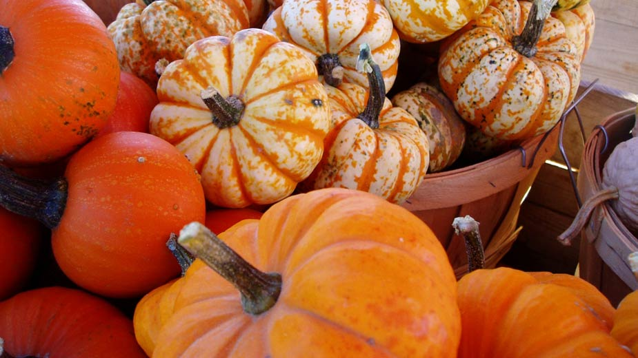 Pumpkin Fest Craft Show