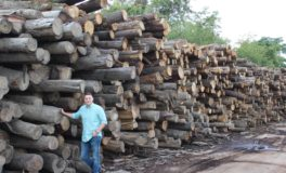 Region's Lumber Industry Grows with Abundance of Hardwood Forests