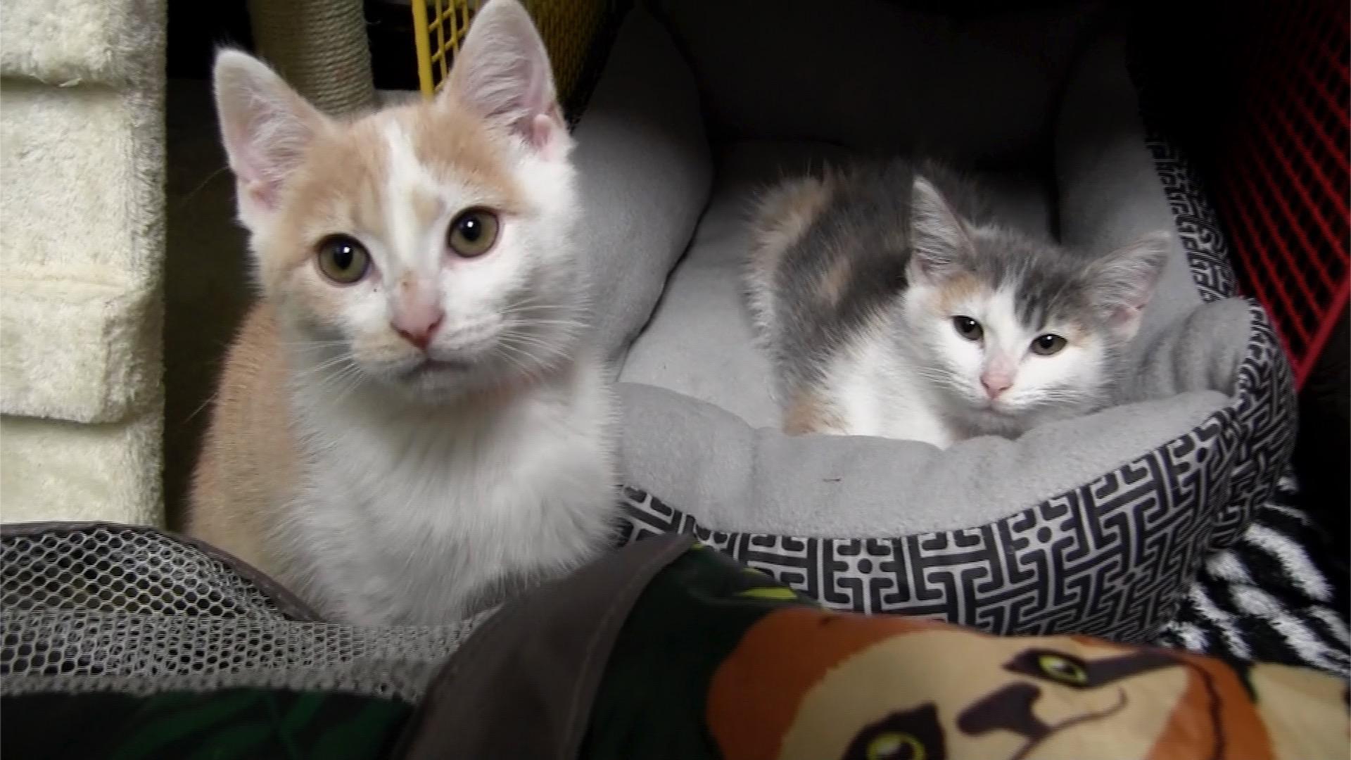 Kitten Season in Full Swing