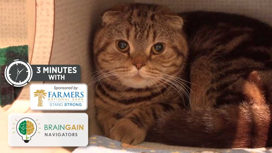 Need Drive Growth at Angels for Animals